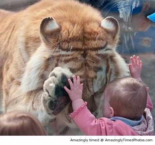 아기와 호랑이 사진.jpg